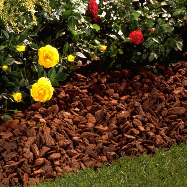 Am nagement ext rieur gedimat materiaux bricolage for Plantes decoratives exterieur